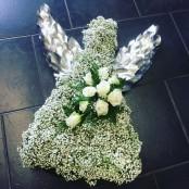 Gypsophila Angel